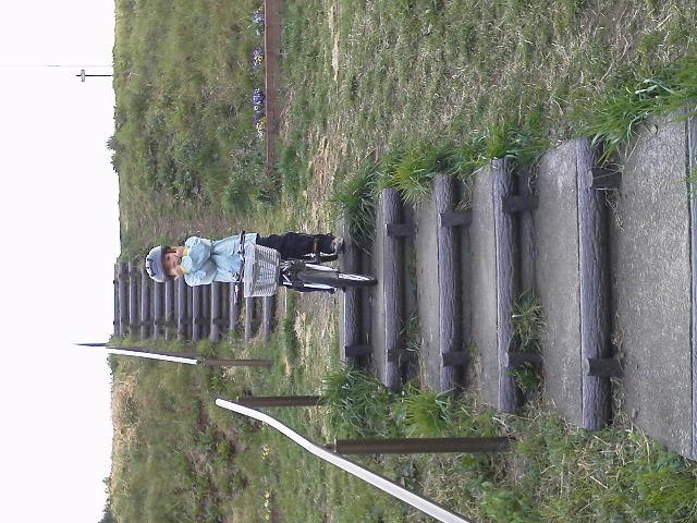 サクラ探しサイクリング