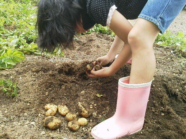 芋掘り(^-^)/