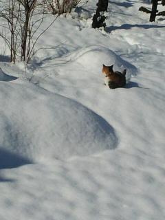 雪いっぱい!